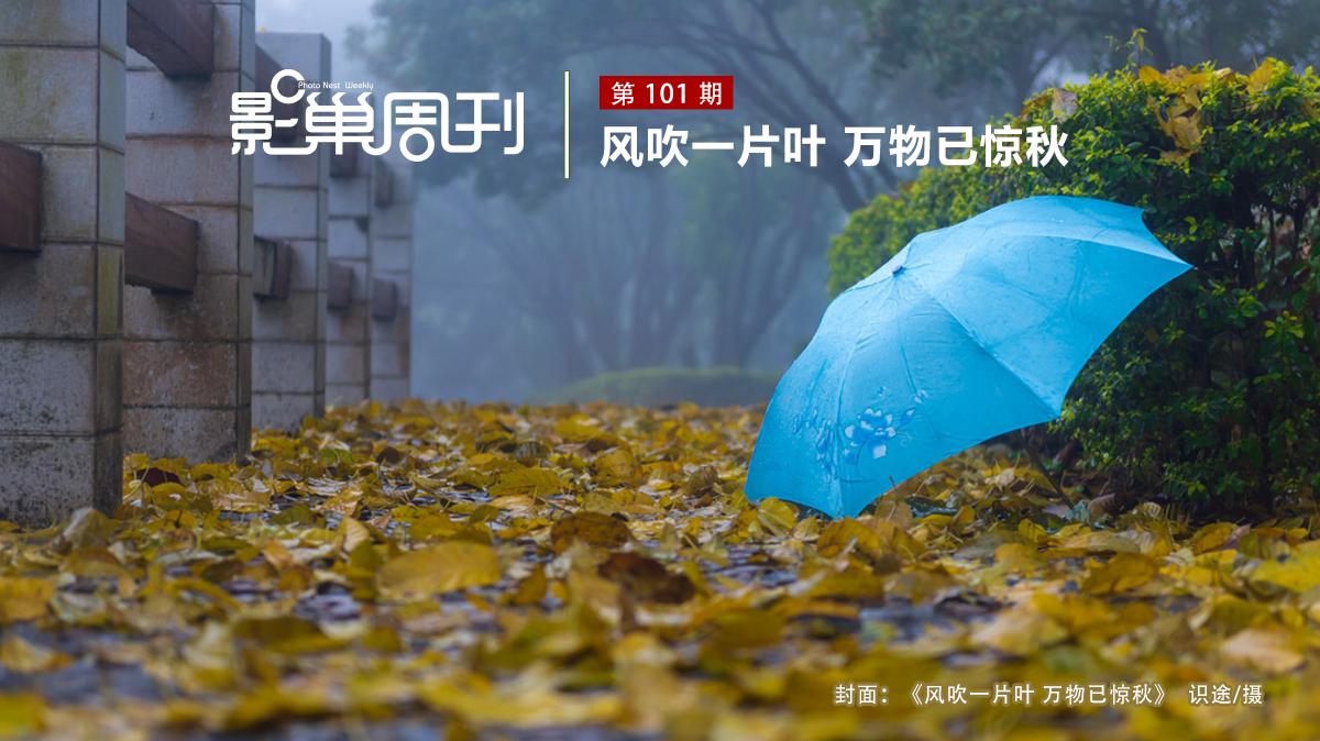 【影巢周刊】風吹一片葉 萬物已驚秋