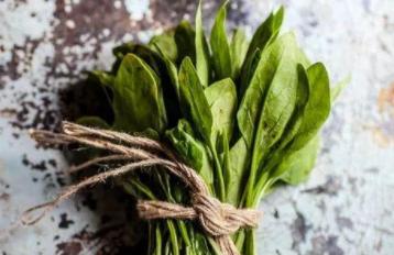 吃菠菜能增長肌肉力量,原來大力水手沒騙人