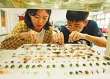 大學生暑假作業抓100個科以上昆蟲