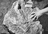 古生物學家發現亞洲首例霸王龍足跡
