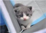 花25萬復活的貓,跟原來的完全一樣嗎?