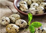 雞蛋、鴨蛋、鵪鶉蛋、鵝蛋,到底有什麼區別?