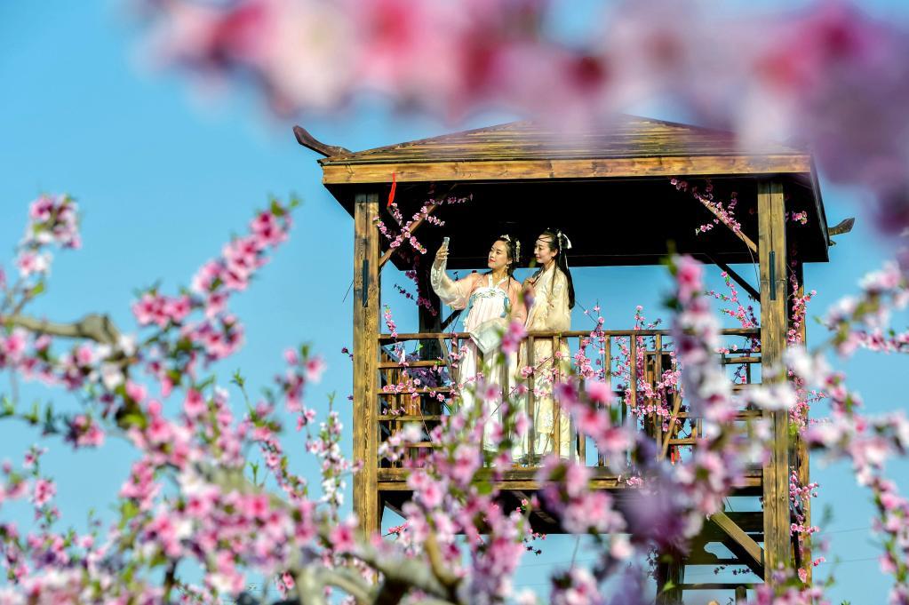 春花的色彩就是醉人 隨手一拍就是美麗風景