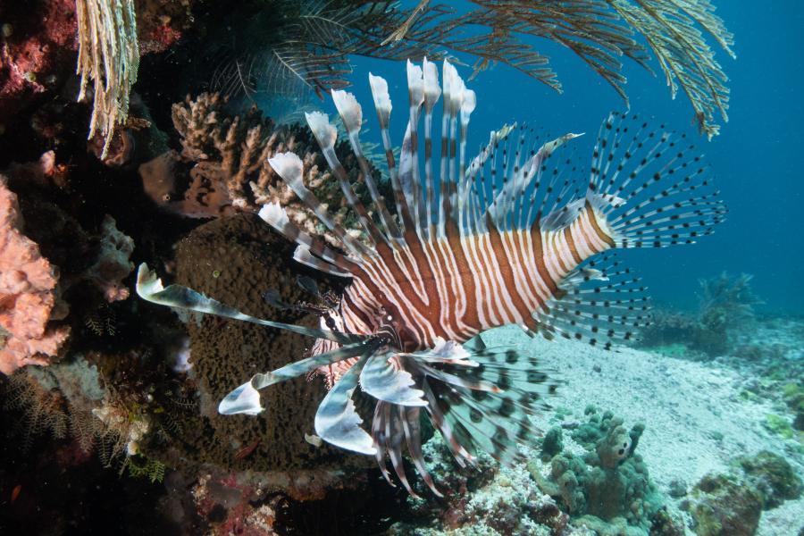 【新華圖視】豐富多彩的海洋世界