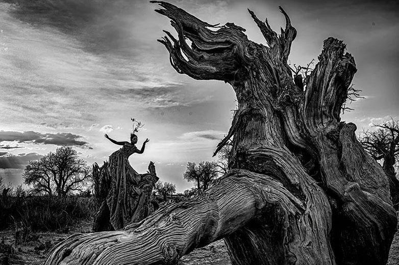 【新華圖視】攝影師實拍新疆木壘原始胡楊林