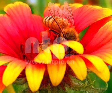 小蜜蜂圆筒手工制作大全图片