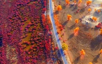秋到塔裏木