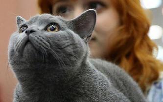 國際貓咪選秀賽