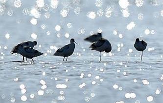 天津北大港濕地迎來大批遷徙候鳥
