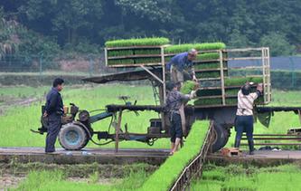 武義:芒種時節農事忙