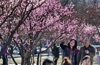 北京:春意盎然