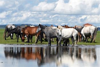 馬蹄踏水 舞動草原