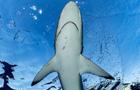 """""""海洋之美""""公益展呼吁保护海洋"""