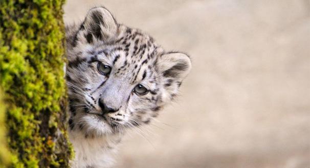 [视频]珍稀动物频频出现 生态系统持续修复
