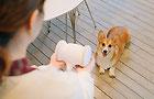 一邊是愛與陪伴 一邊是宅犬擾鄰 難題怎麼破?