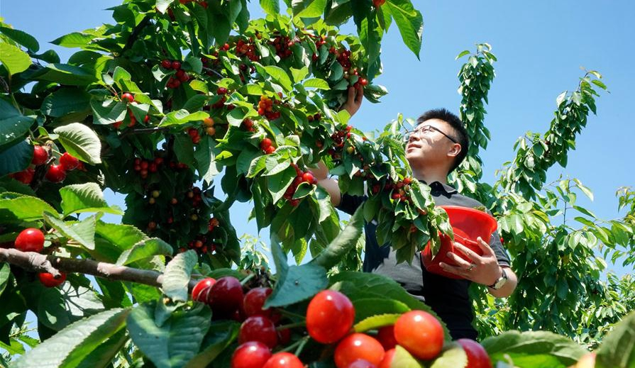 河北遷安:休閒農業促增收