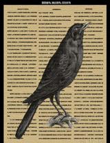 如您愛鳥,請去觀鳥,切勿關鳥