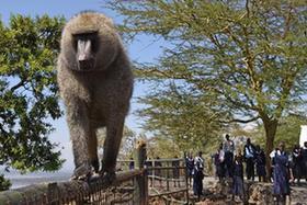 走進肯尼亞納庫魯湖國家公園