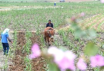 廣西:春來農事忙