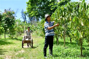 海南萬寧:咖啡産業助推經濟發展