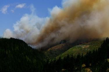 新西蘭北島突發森林大火