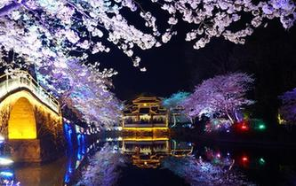 無錫太湖黿頭渚夜櫻絢爛