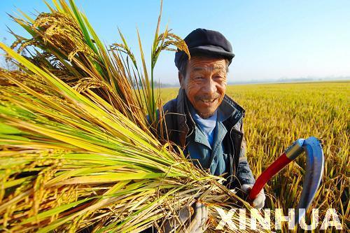 農村電子商務發展的戰略與政策