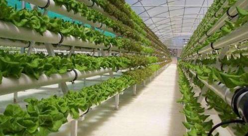福建出台七大举措力促数字农业发展