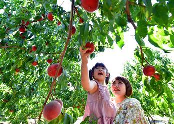 河北灤州:荒山變身富農生態園