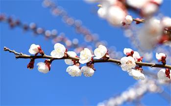 春季花爭艷