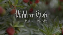 優品尋訪錄丨上虞二都楊梅