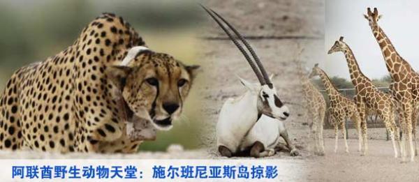 春运 濒危野生动物制品