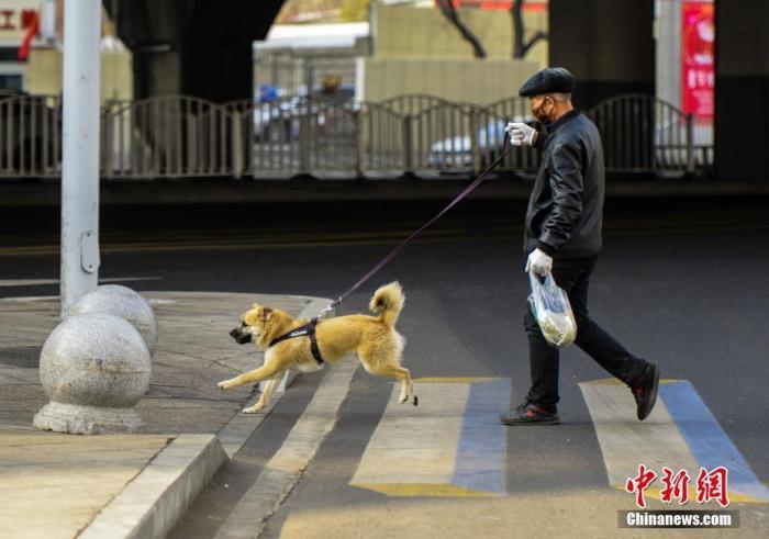 出门遛狗必须拴绳,骗保将被重罚……5月新规来了!