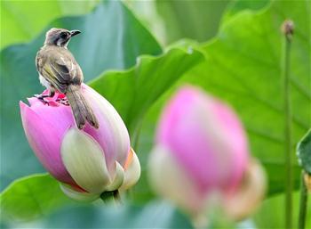福州:看花觀鳥兩相宜