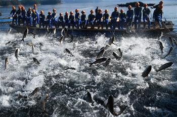 浙江千島湖:巨網捕魚