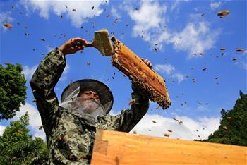 懸崖採割夏至蜜