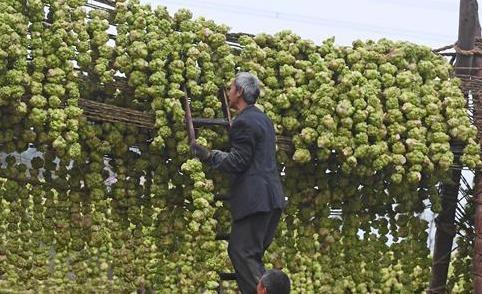 重慶:小菜頭大産業 助推村民增收