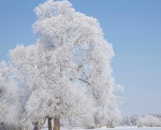 新疆額爾齊斯河流域現唯美霧凇景觀