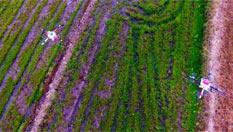 植保無人機助力江西現代農業