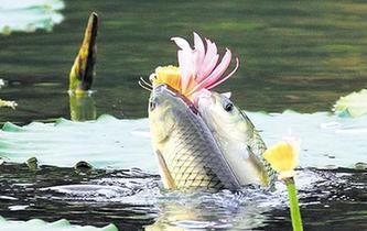 """魚""""戀""""花"""