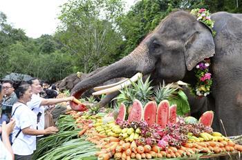 雲南西雙版納舉辦世界大象日活動