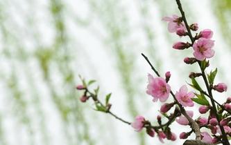 杭州:春到白堤 桃紅柳綠