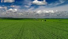 錫林郭勒草原夏日美景