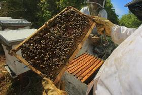 加沙養蜂人