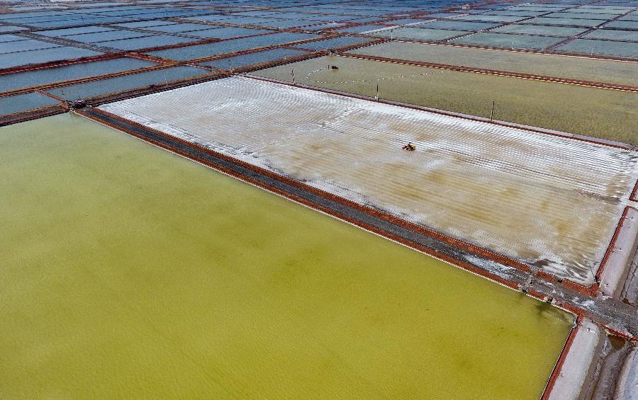 長蘆鹽區收獲春鹽