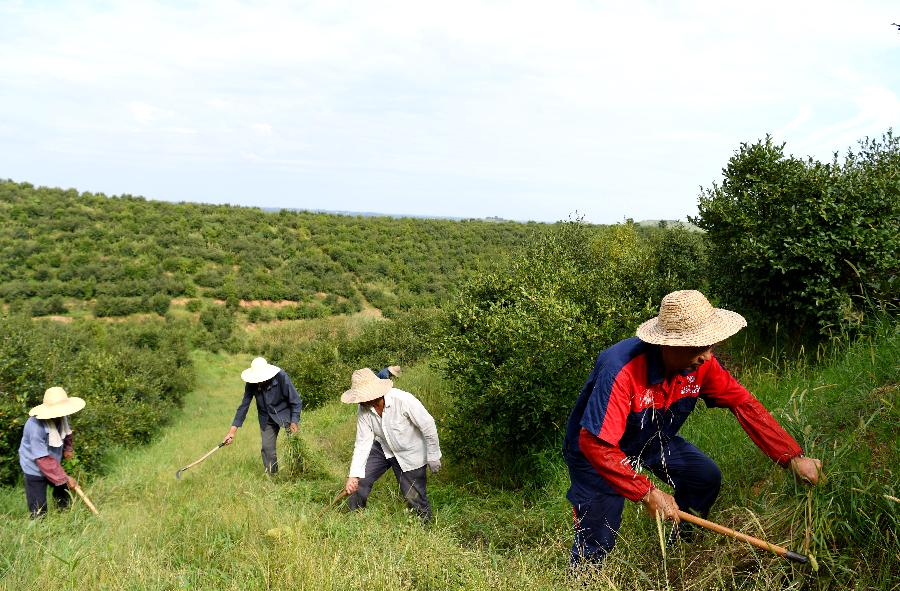 河南光山:油茶産業促民增收