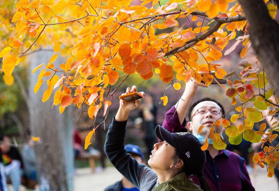 北京坡峰嶺:金秋紅葉引遊人