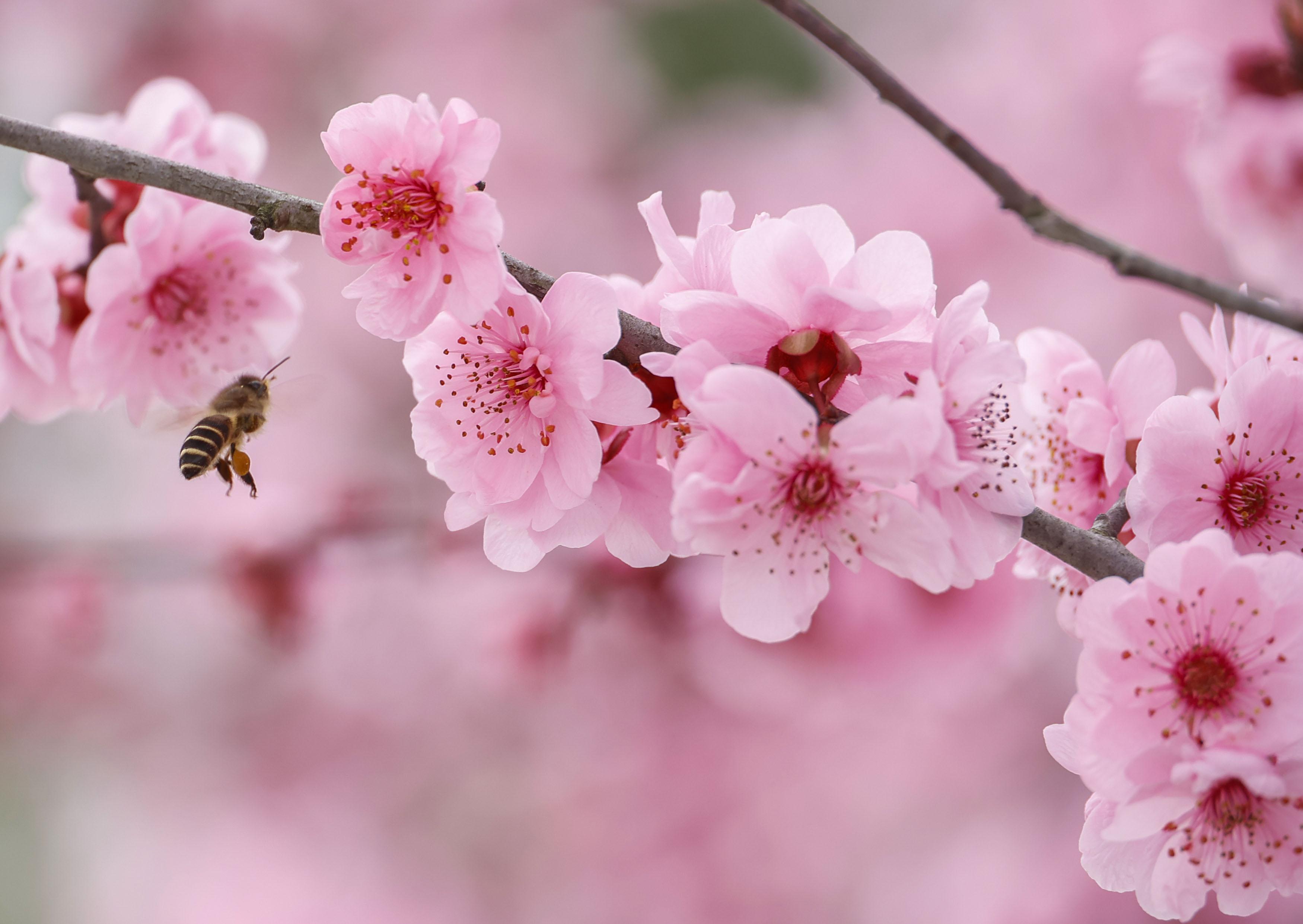 早春風物丨花兒悄悄綻放,隔著屏幕都沉醉了