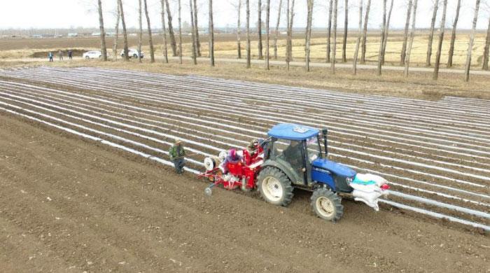黑龍江寧安:馬鈴薯科學化種植全面展開