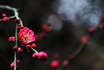 花香迎春來